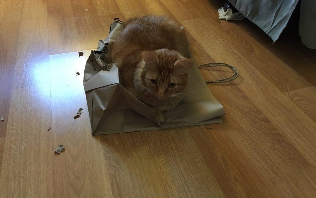 String, Bags, kittehs! #YatCats #themetrys 09-Jan-2020